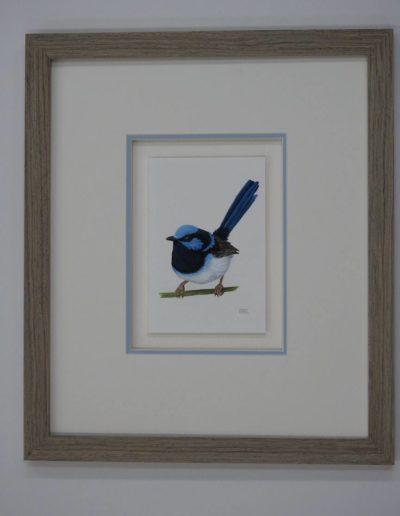 Blue Wren *SOLD*