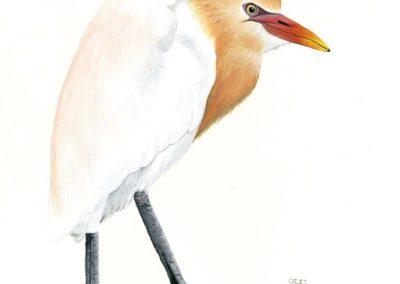 Cattle Egret // SOLD