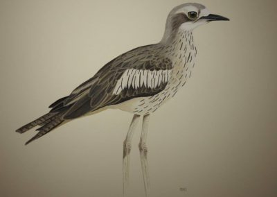 Curlew // $395