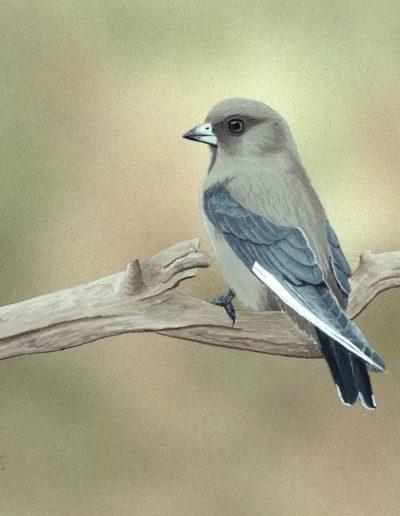 Dusky Woodswallow *SOLD*