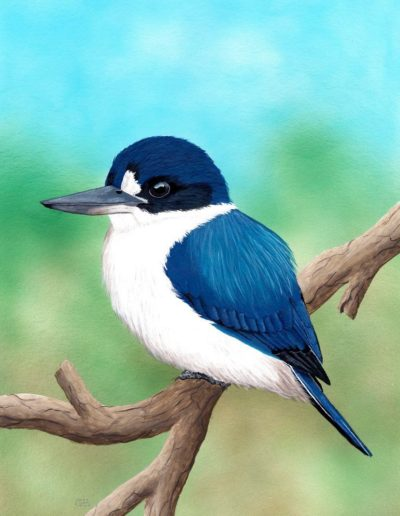 Forest Kingfisher *SOLD*