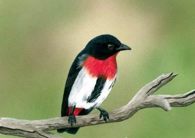 Mistletoe Bird // $270