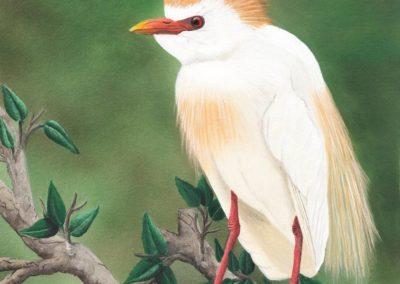 Nesting Egret // $425