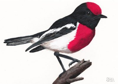 Red Capped Robin // $245