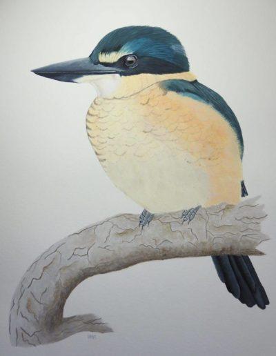 Sacred Kingfisher *SOLD*