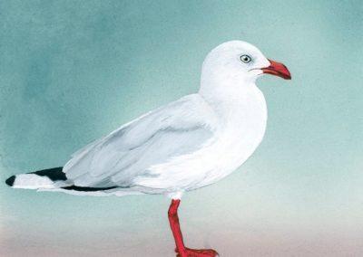 Silver Gull // SOLD