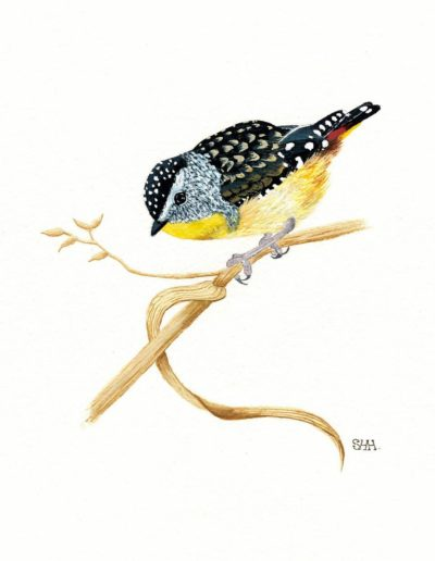 Spotted Pardalote 2 *SOLD*