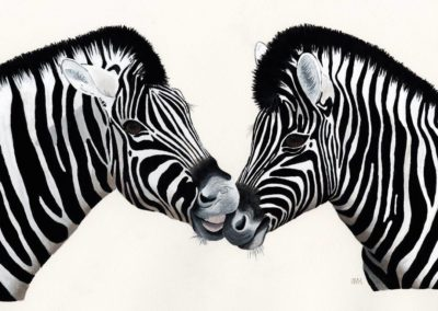 Zebra Family Portrait // SOLD